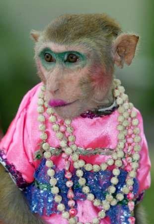 Ron Monkey